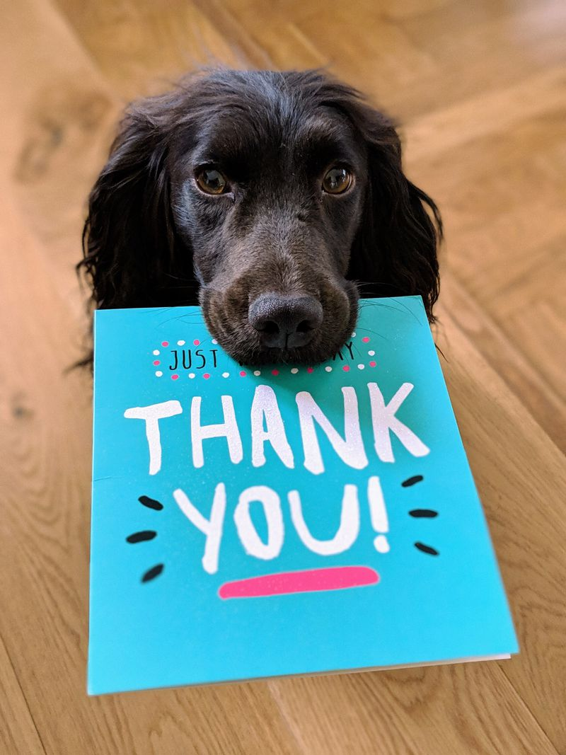 Black dog with a thank you card in his mouth